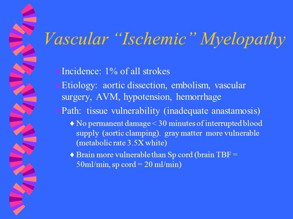 Vascular Ischemic Myelopathy