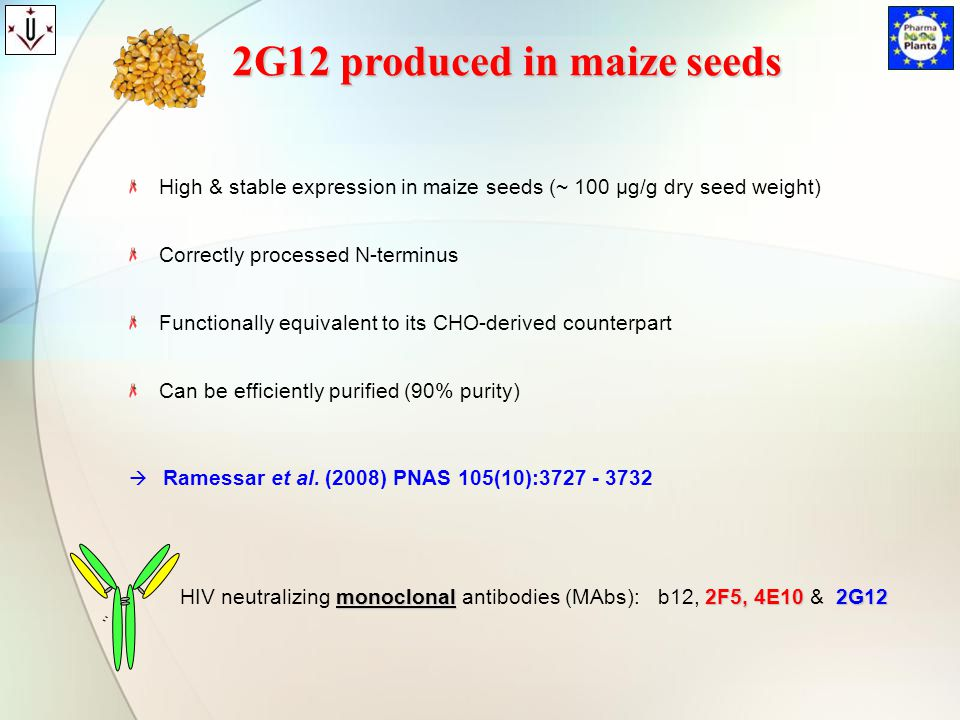 2G12 produced in maize seeds