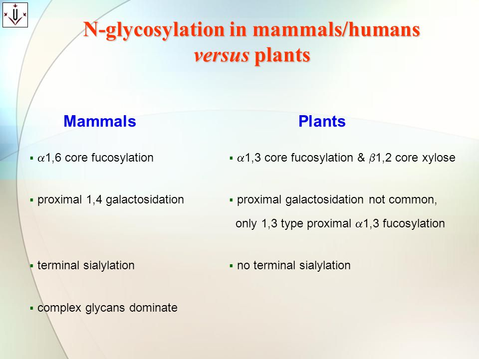 N-glycosylation in mammals/humans