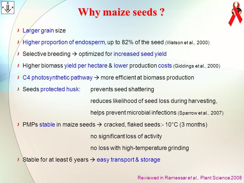 Why maize seeds Larger grain size