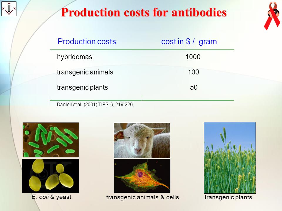 Production costs for antibodies