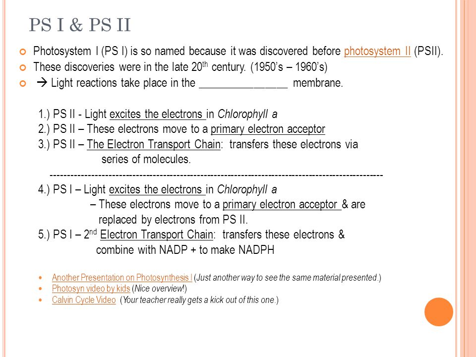 PS I & PS II Photosystem I (PS I) is so named because it was discovered before photosystem II (PSII).