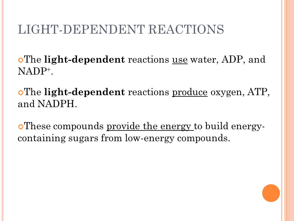 LIGHT-DEPENDENT REACTIONS