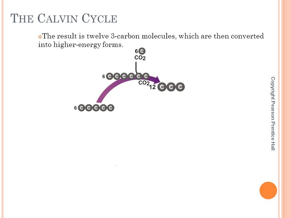 The Calvin Cycle The result is twelve 3-carbon molecules, which are then converted into higher-energy forms.