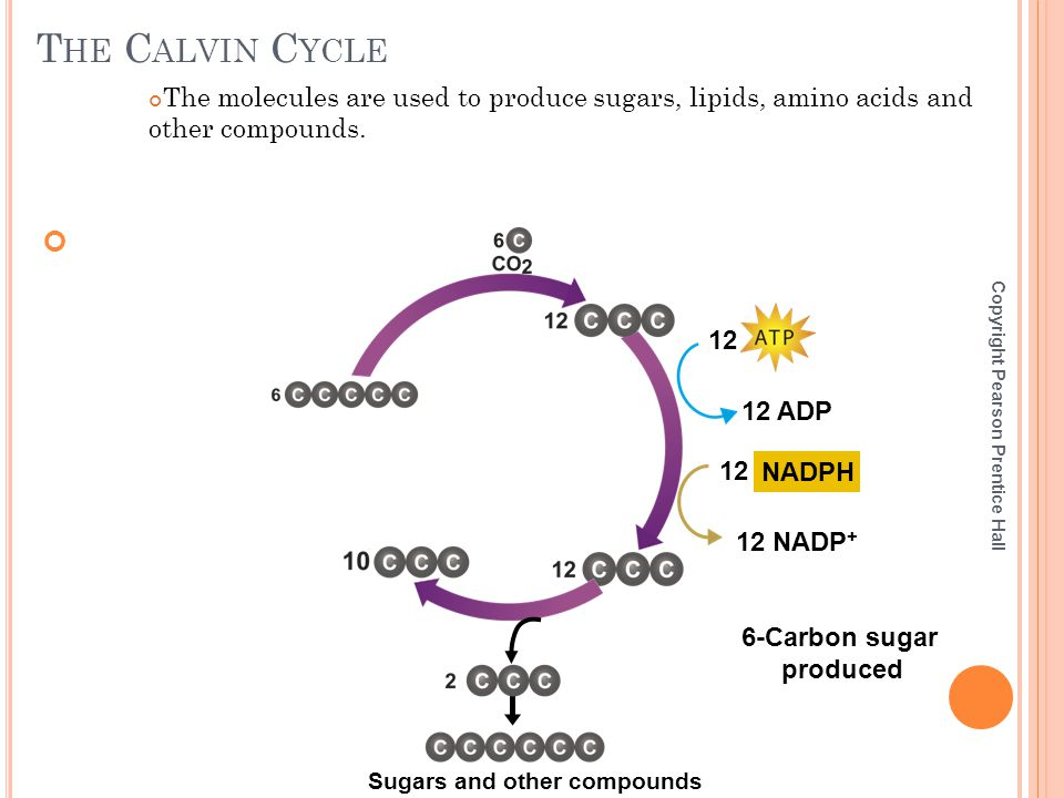 6-Carbon sugar produced Sugars and other compounds