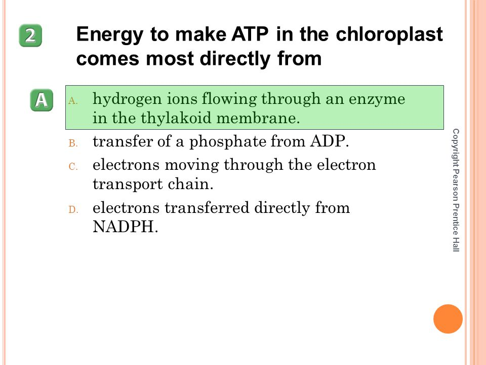 Energy to make ATP in the chloroplast comes most directly from