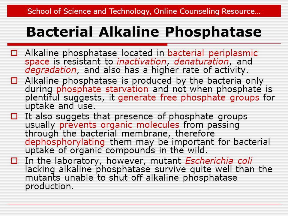 Bacterial Alkaline Phosphatase