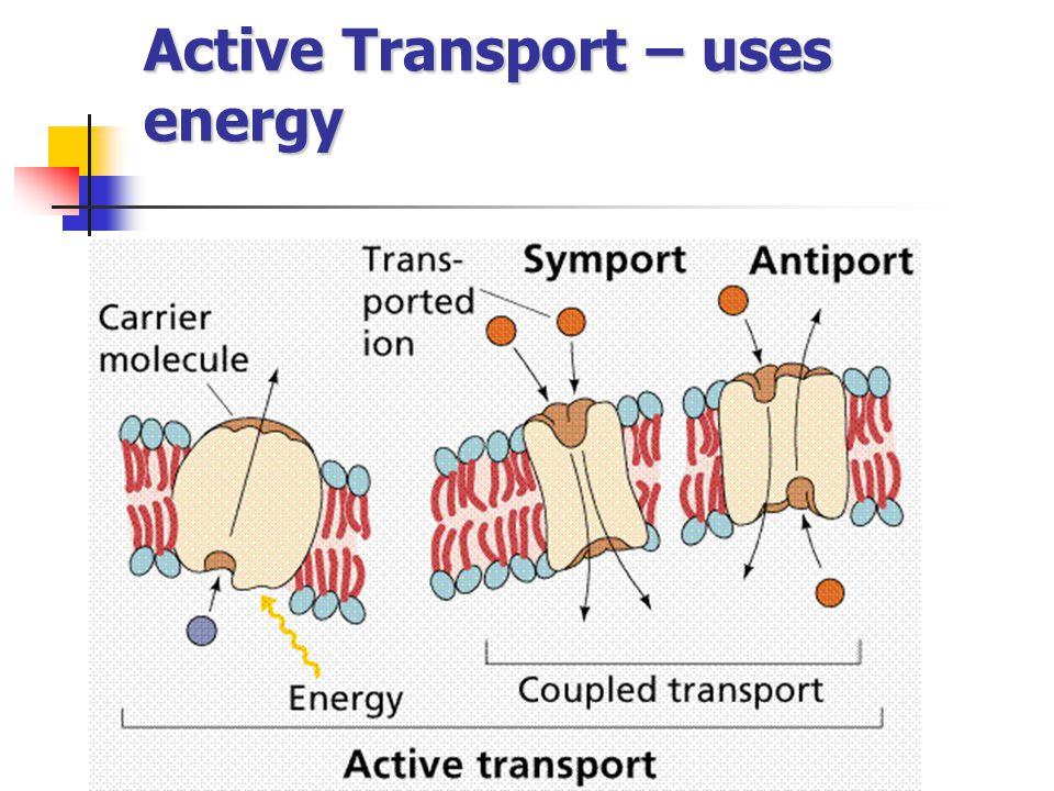 Active Transport – uses energy
