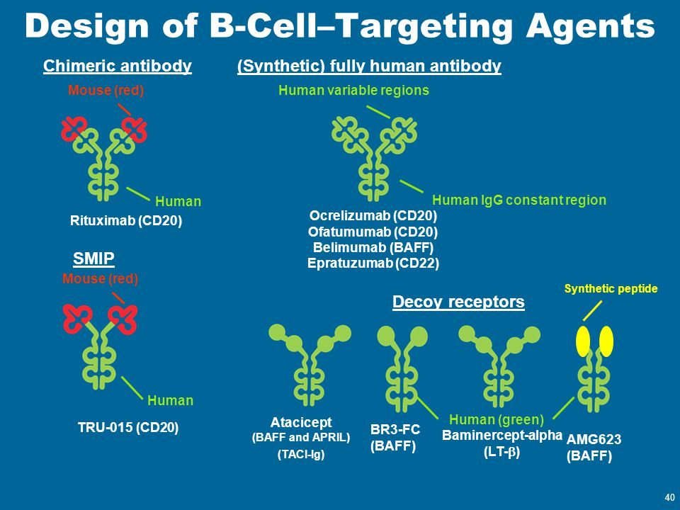 Design of B-Cell–Targeting Agents