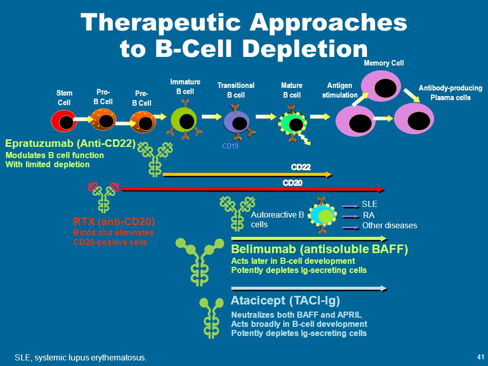 Therapeutic Approaches to B-Cell Depletion