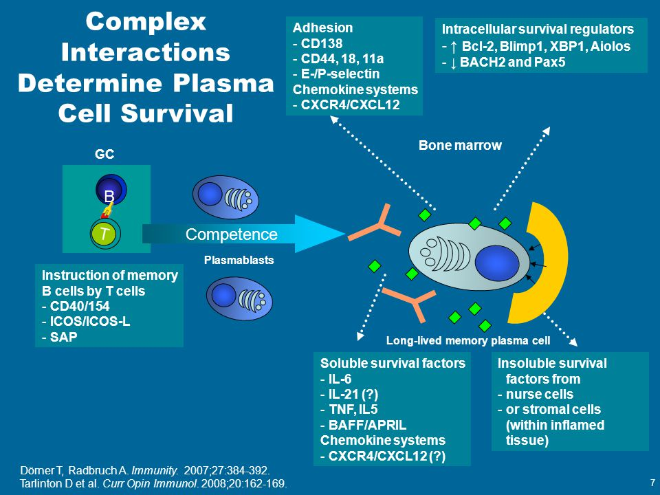 Complex Interactions Determine Plasma Cell Survival