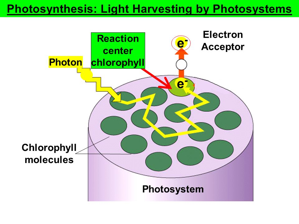 Photosynthesis: Light Harvesting by Photosystems