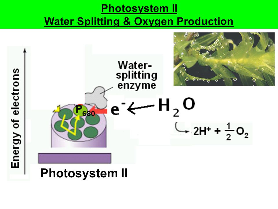 Water Splitting & Oxygen Production