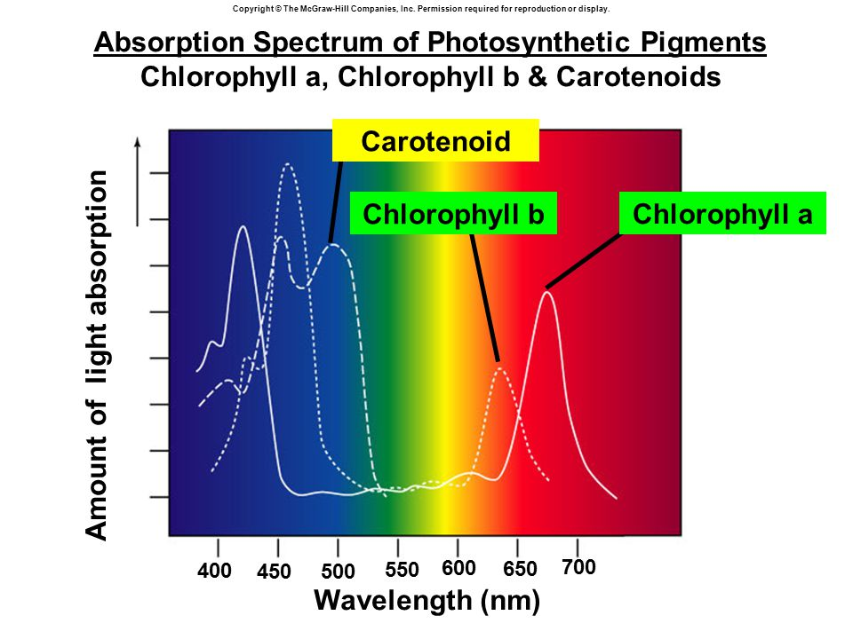Absorption Spectrum of Photosynthetic Pigments