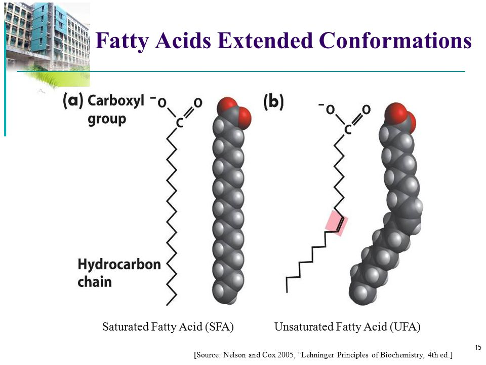 Fatty Acids Extended Conformations