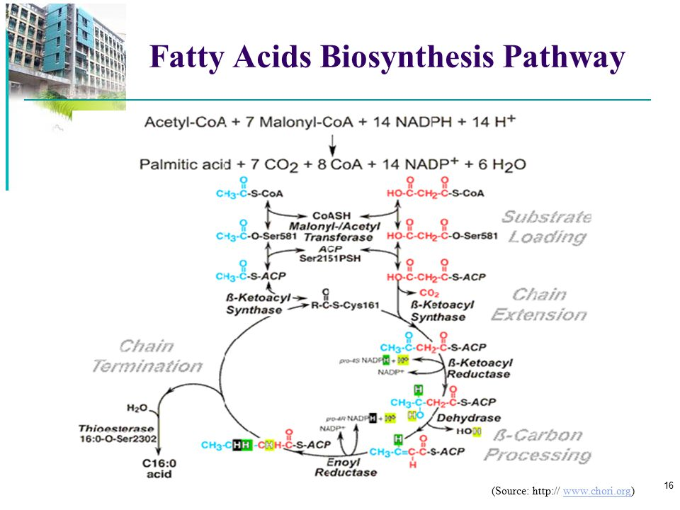 Fatty Acids Biosynthesis Pathway