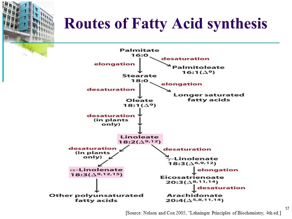 Routes of Fatty Acid synthesis