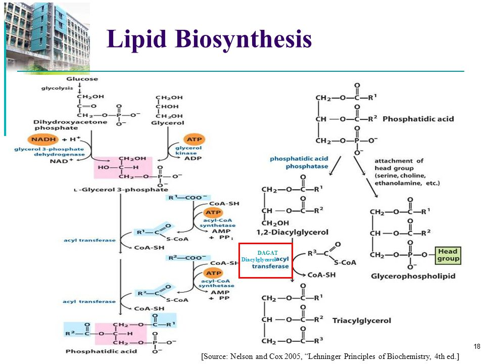 Lipid Biosynthesis DAGAT. Diacylglycerol.