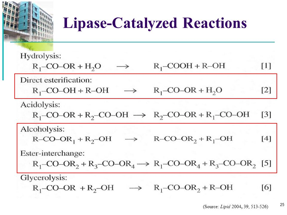 Lipase-Catalyzed Reactions
