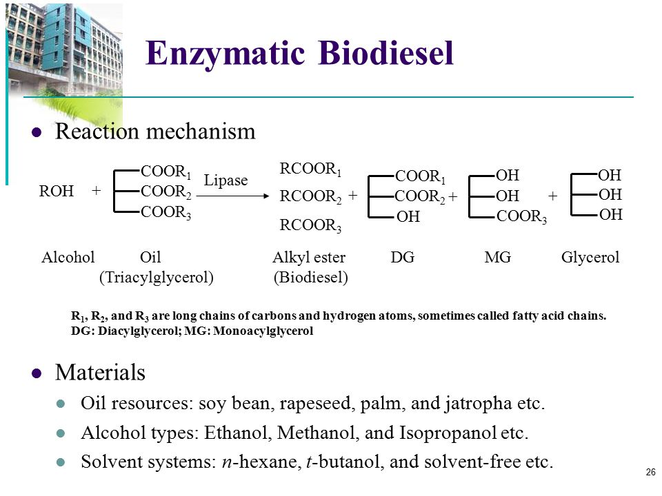 Enzymatic Biodiesel Reaction mechanism Materials