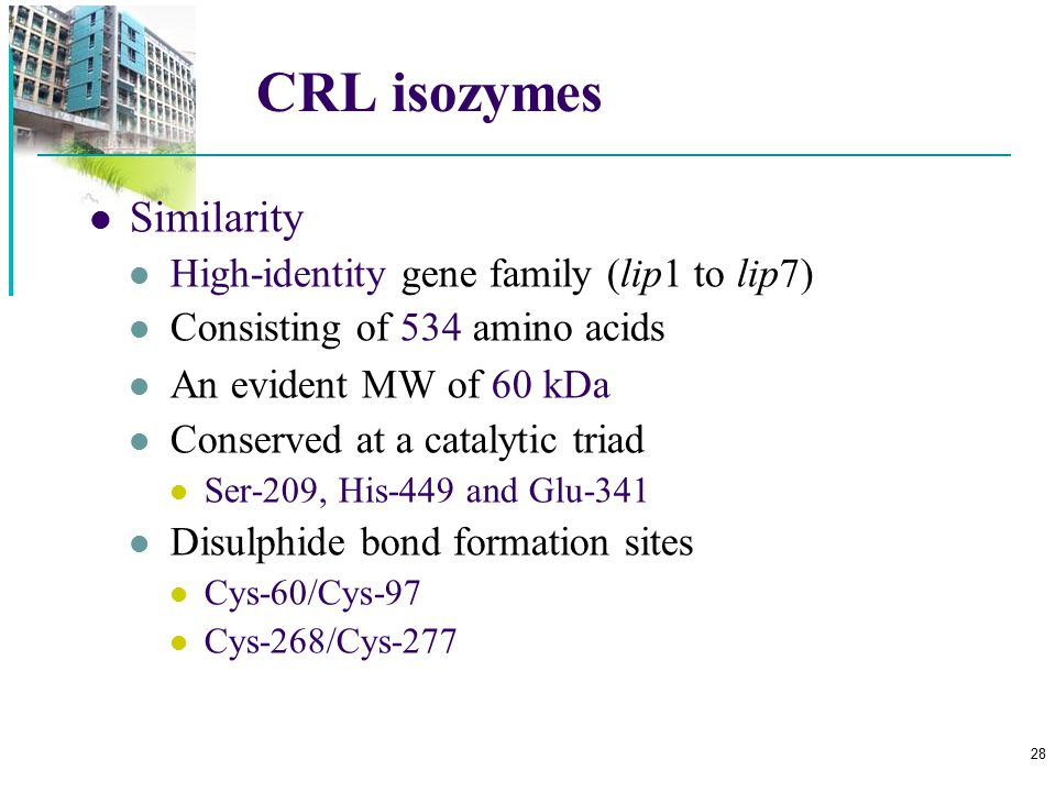 CRL isozymes Similarity High-identity gene family (lip1 to lip7)