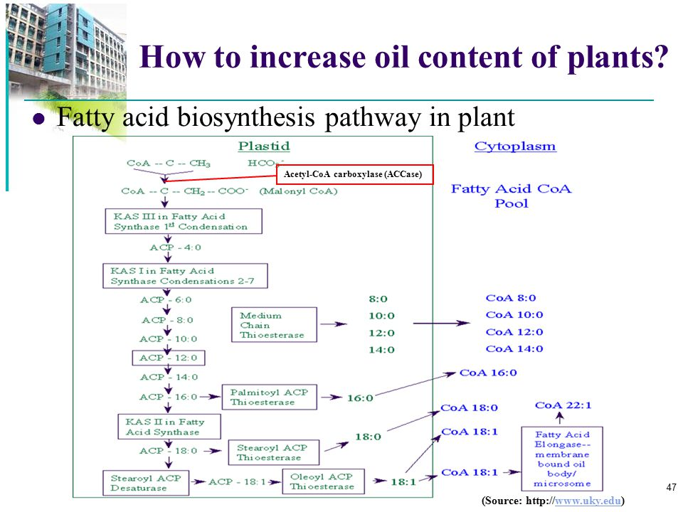 How to increase oil content of plants