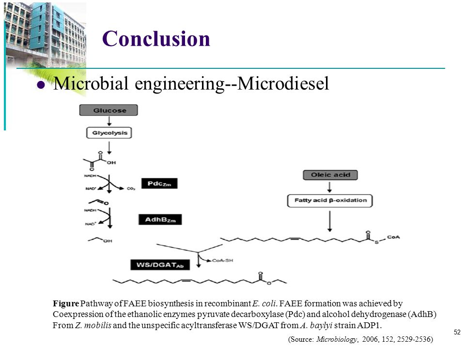 Conclusion Microbial engineering--Microdiesel