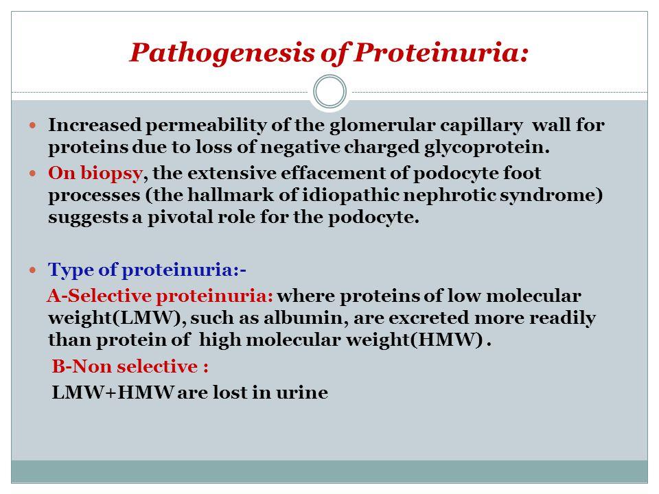 Pathogenesis of Proteinuria: