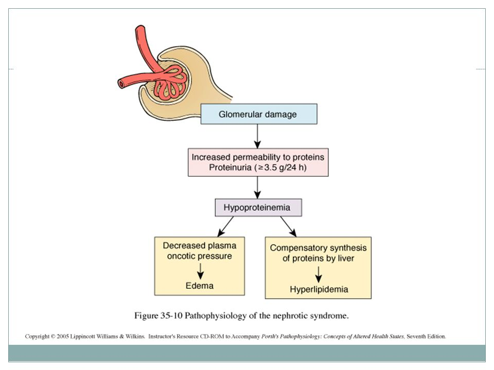How many pathological types causes nephrotic syndrome