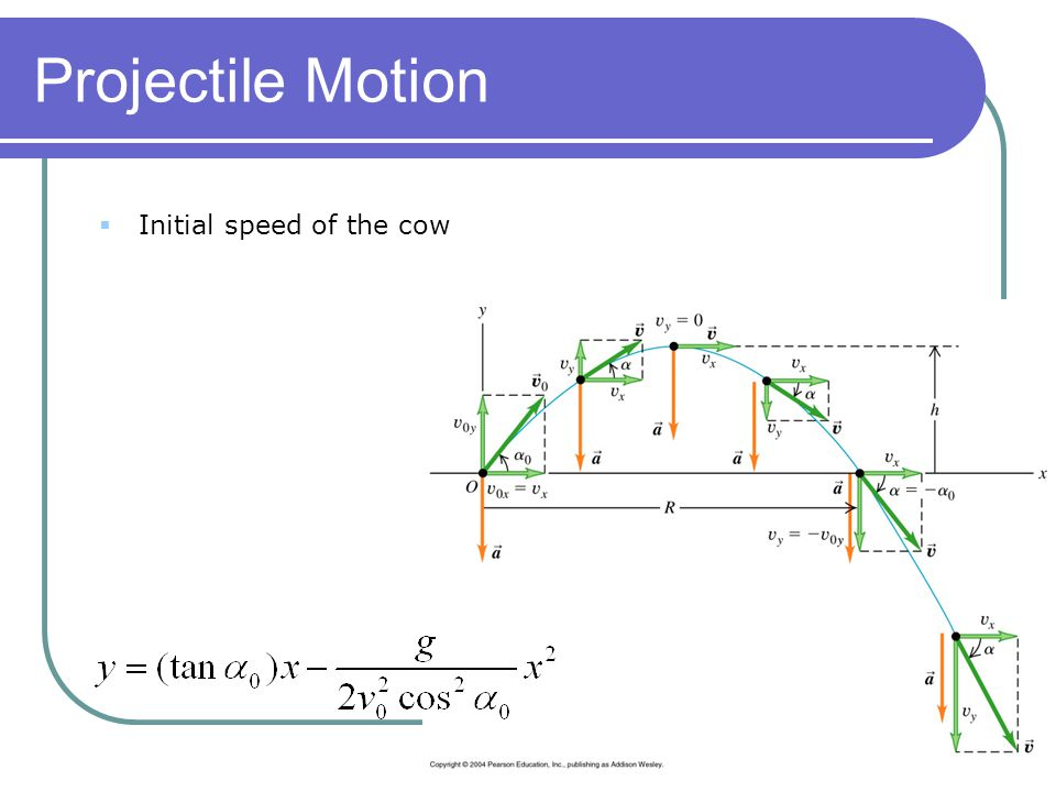 Projectile Motion Initial speed of the cow