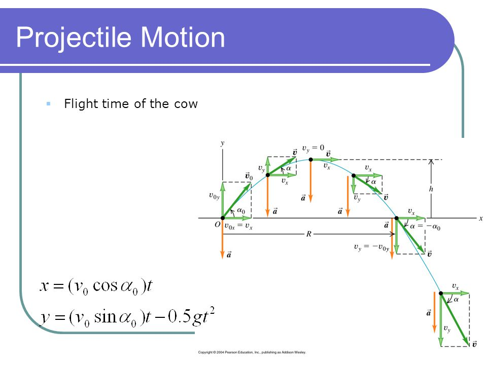 Projectile Motion Flight time of the cow