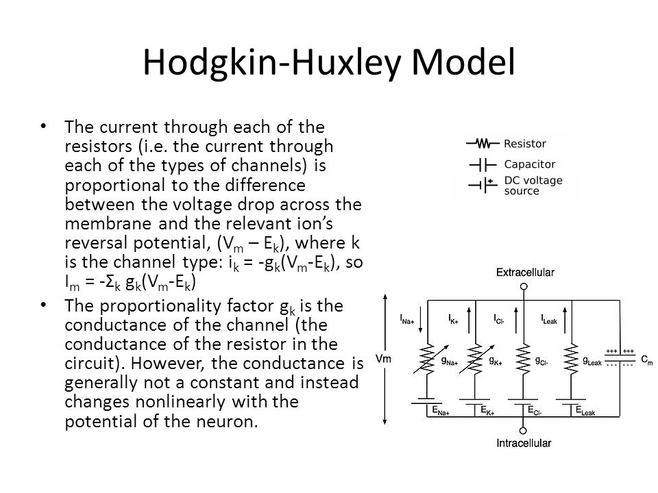 Hodgkin-Huxley Model