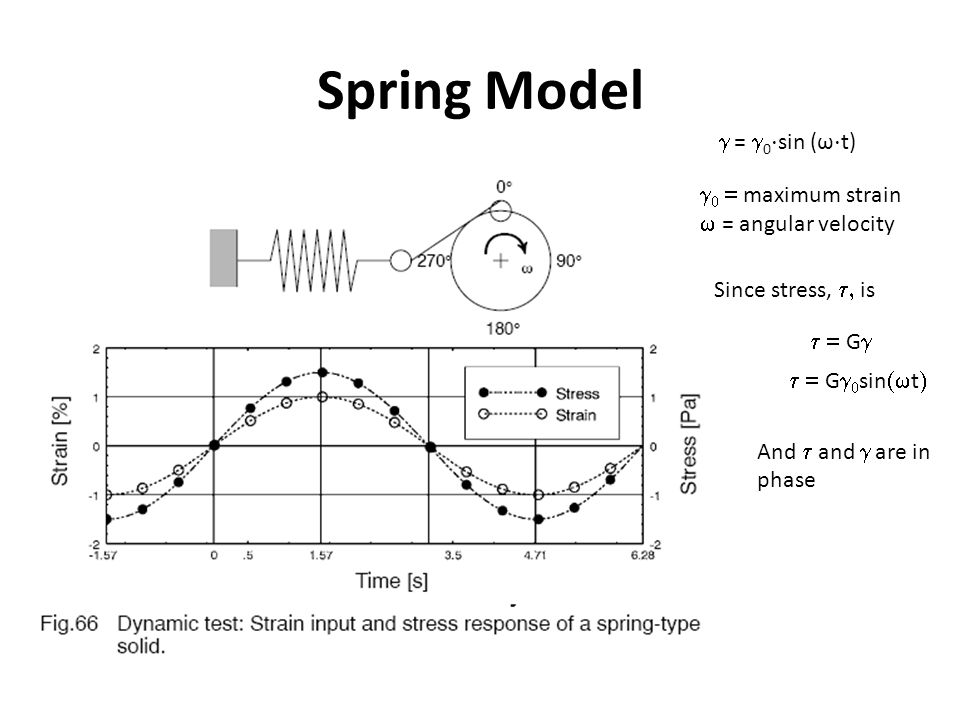 Spring Model g = g0⋅sin (ω⋅t) g0 = maximum strain w = angular velocity