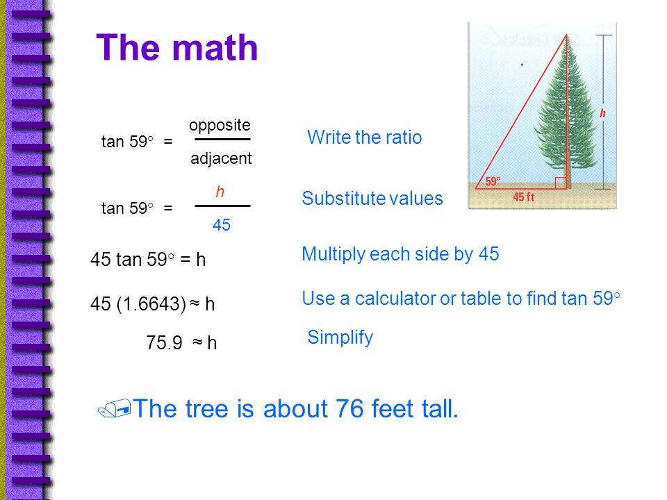 The math The tree is about 76 feet tall. Write the ratio