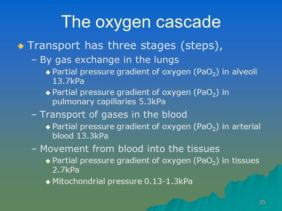 The oxygen cascade Transport has three stages (steps),