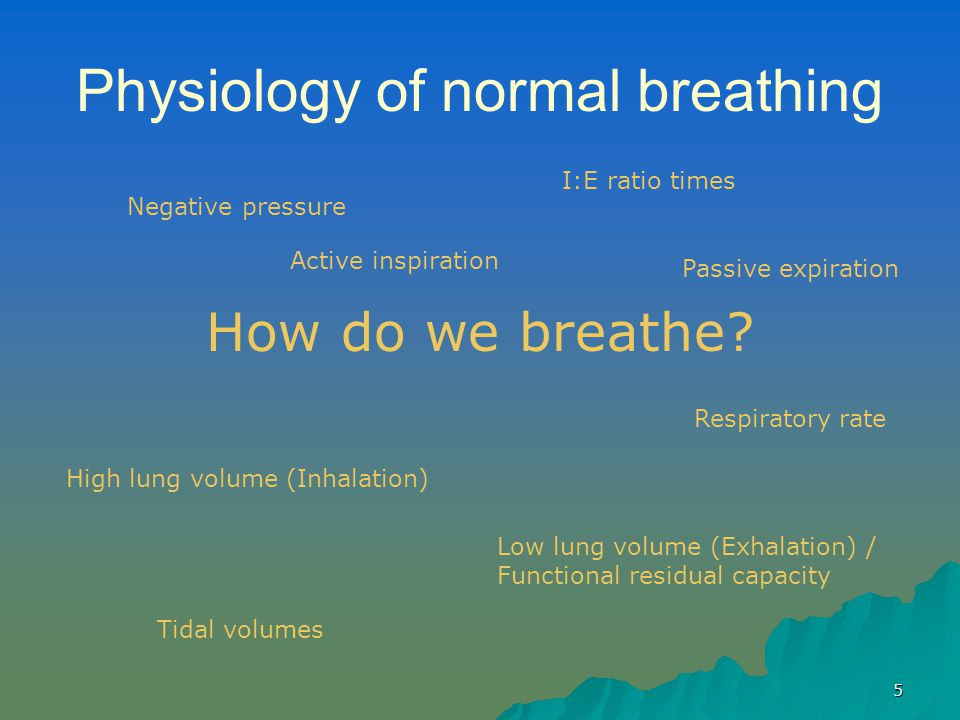 Physiology of normal breathing