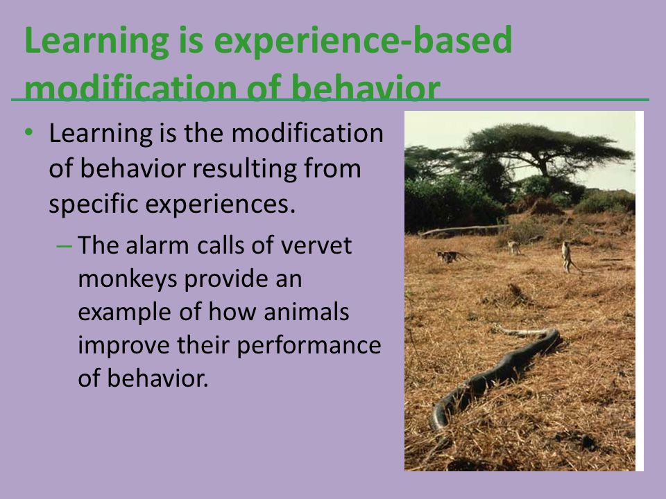 Learning is experience-based modification of behavior