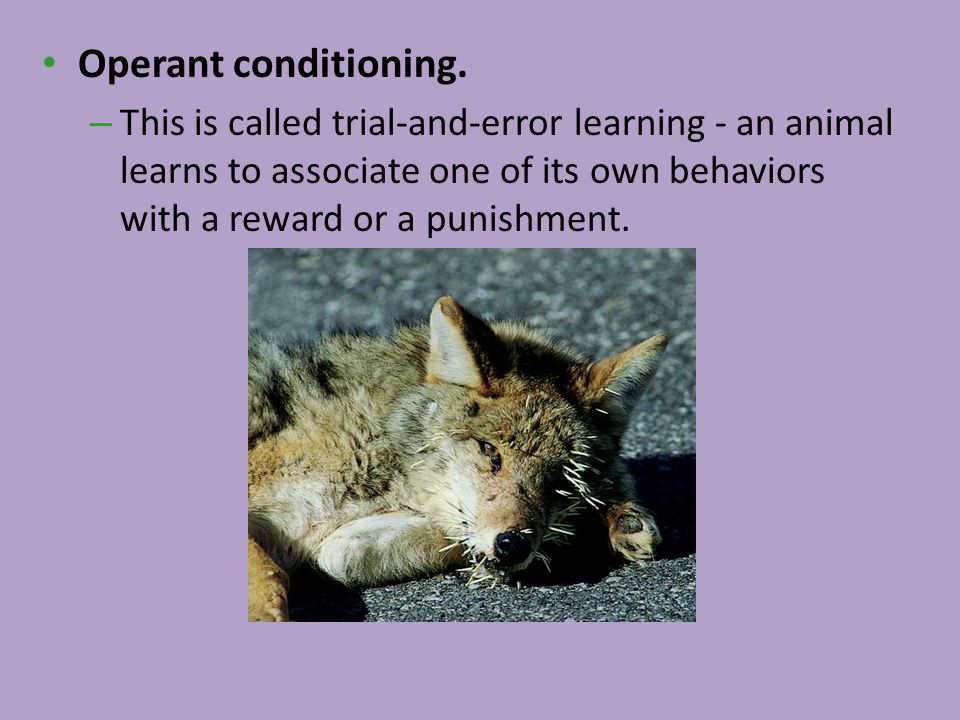 Operant conditioning.