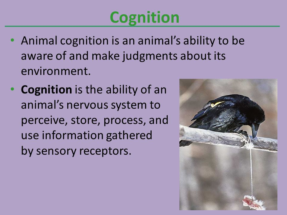 Cognition Animal cognition is an animal's ability to be aware of and make judgments about its environment.