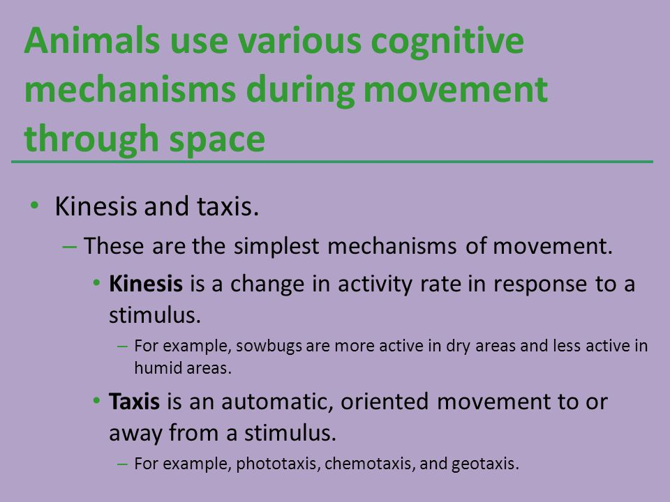 Animals use various cognitive mechanisms during movement through space