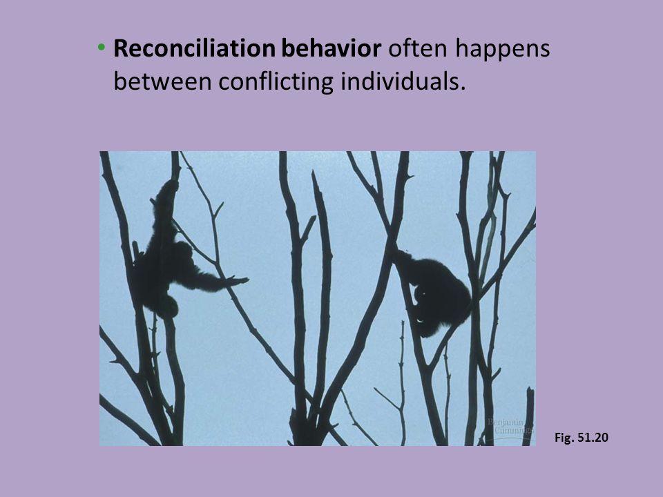 Reconciliation behavior often happens between conflicting individuals.