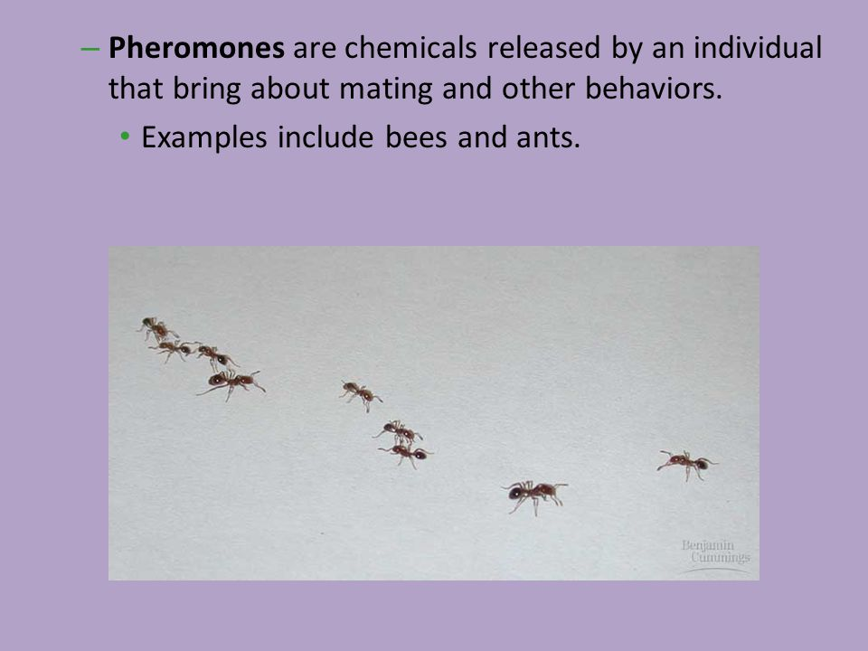 Pheromones are chemicals released by an individual that bring about mating and other behaviors.