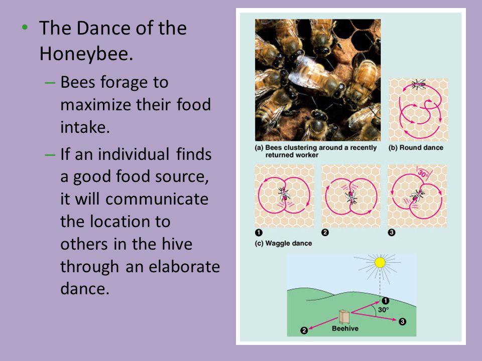The Dance of the Honeybee.
