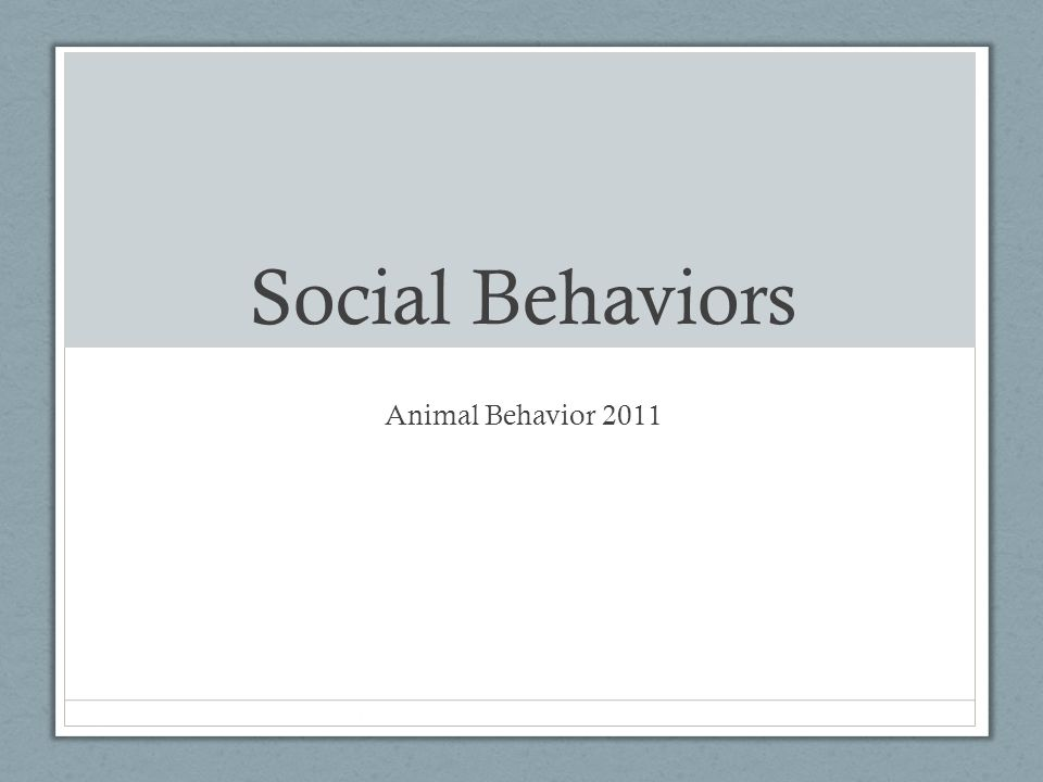 social behaviour in animals pdf