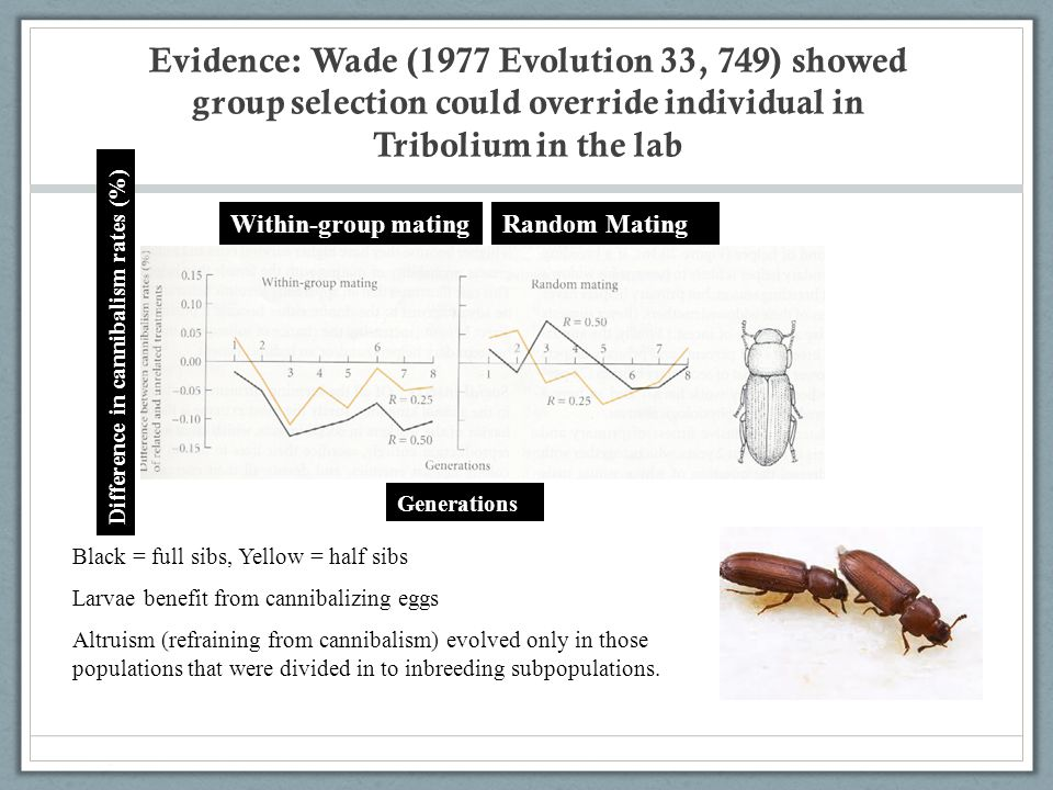 Evidence: Wade (1977 Evolution 33, 749) showed group selection could override individual in Tribolium in the lab