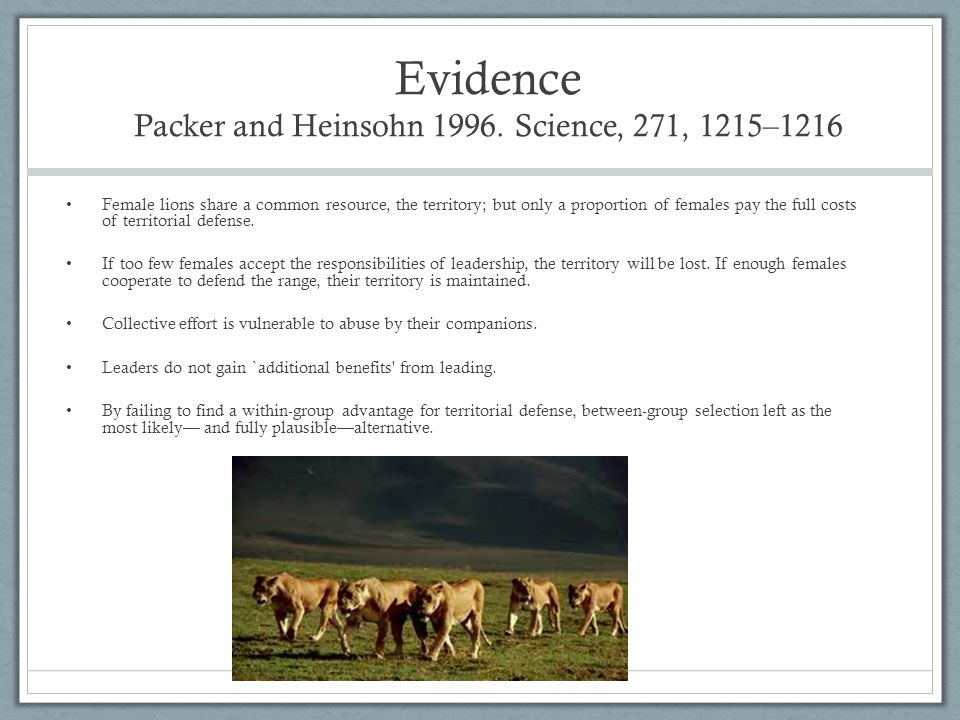 Evidence Packer and Heinsohn 1996. Science, 271, 1215–1216