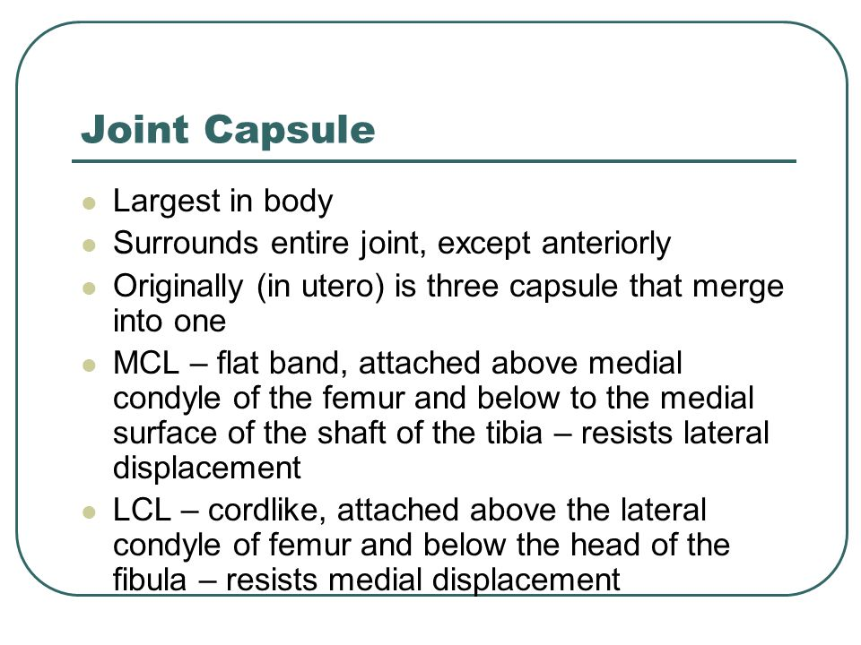 Joint Capsule Largest in body