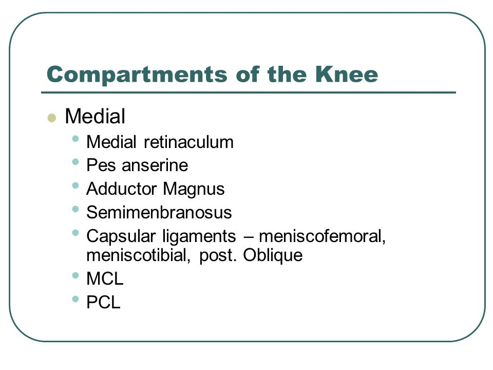Compartments of the Knee