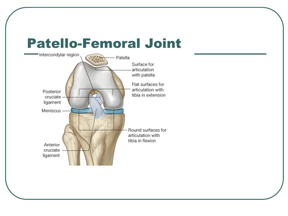 Patello-Femoral Joint
