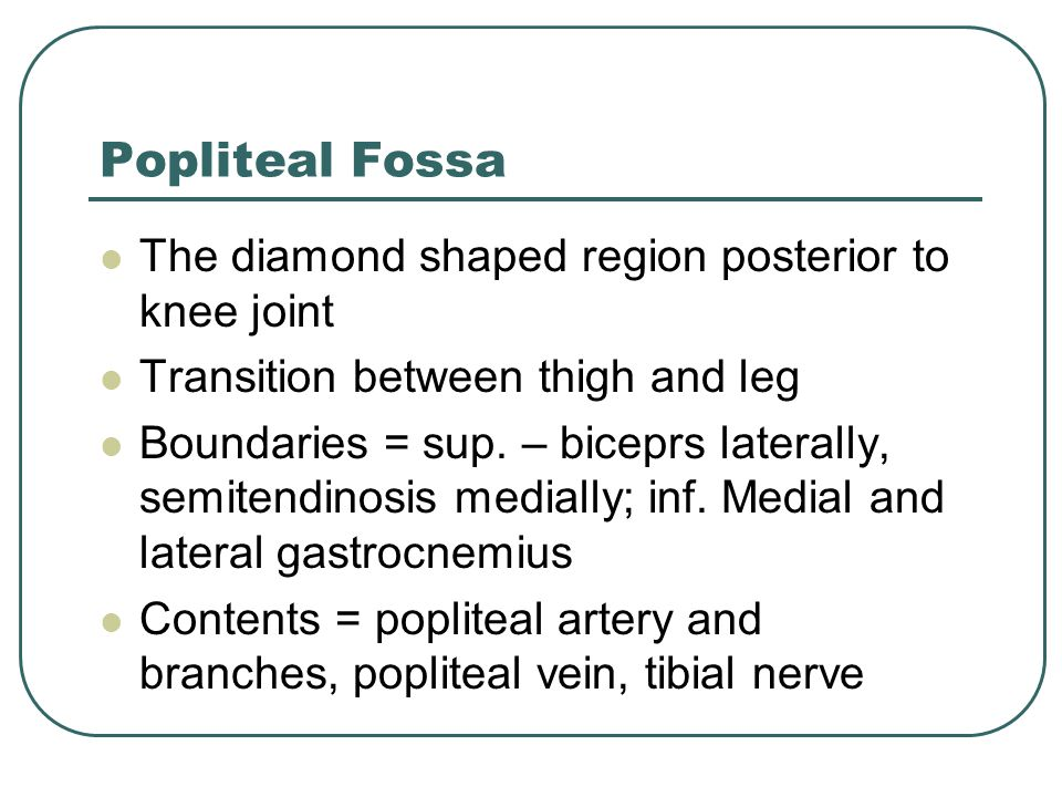 Popliteal Fossa The diamond shaped region posterior to knee joint
